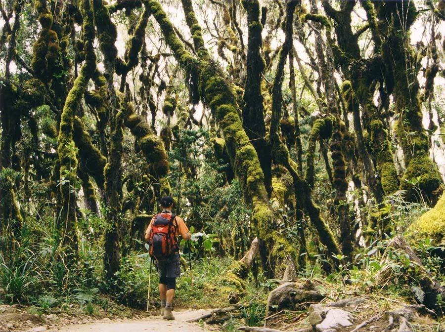 Земную жизнь пройдя до половины, я очутился в сумрачном лесу. Каждый, кто выберет маршрут Умбве сможет почувствовать себя Данте Алигьери. Как выглядит стандартный день во время восхождения